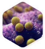 https://www.pharm-olam.com/hubfs/assets/images/Pages/Homepage/icons/Allergy-pollen-hexagon-600px-1-1.png